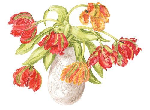 Parrot tulips in vase, Watercolour