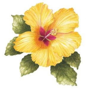 Yellow Hibiscus, Watercolour
