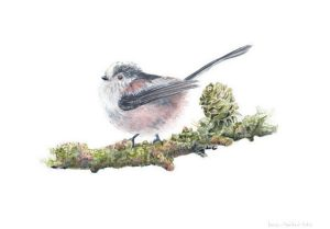 Long-tailed Tit, Watercolour