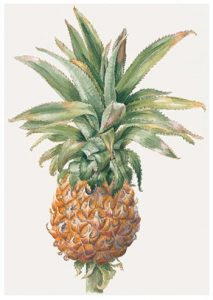 Queen Pineapple, Limited Edition Giclee Print