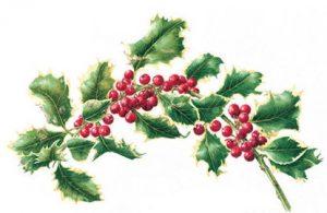Ilex aquifolium 'Aurea Marginata', Watercolour