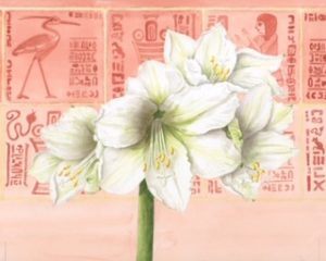 White Amaryllis, Watercolour