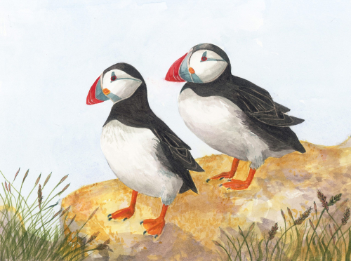 Puffins, Watercolour