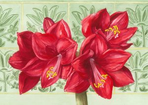 Red Amaryllis , Watercolour