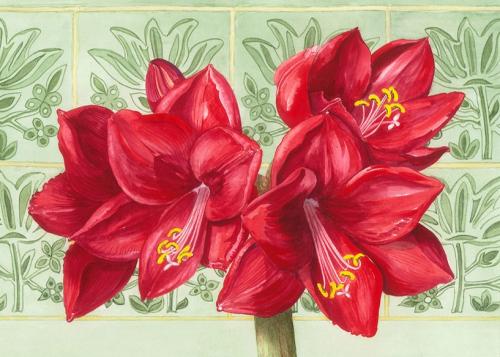 Red Amaryllis , Watercolour