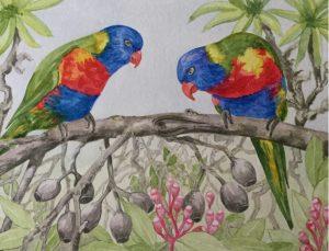 Lorikeets , Watercolour