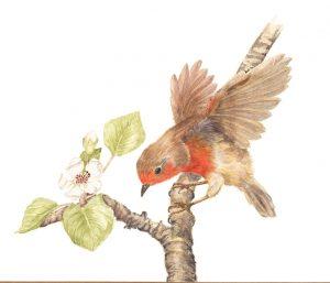 Robin on branch Watercolour