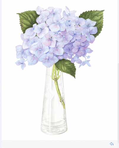 Blue Hydrangea in vase, Watercolour